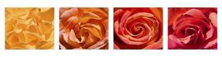 Стеновая панель Роза микс