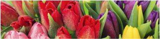 Стеновая панель тюльпаны микс