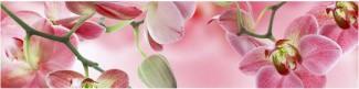 Стеновая панель Розовая орхидея