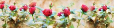 """Фартук с тиснением """"Алые розы"""""""